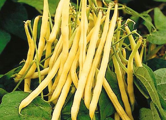 Bean (Bush), Pencil Pod