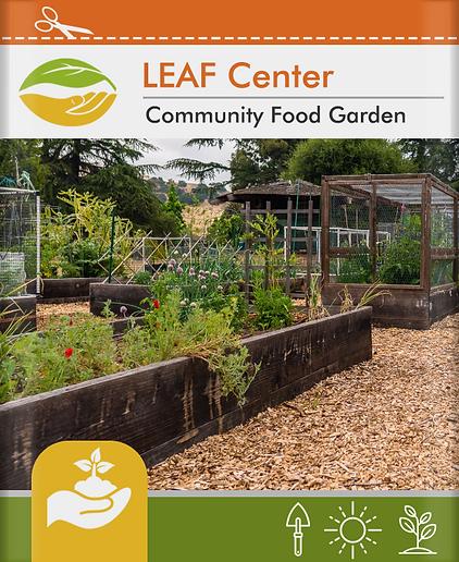 leaf-center.jpg.png