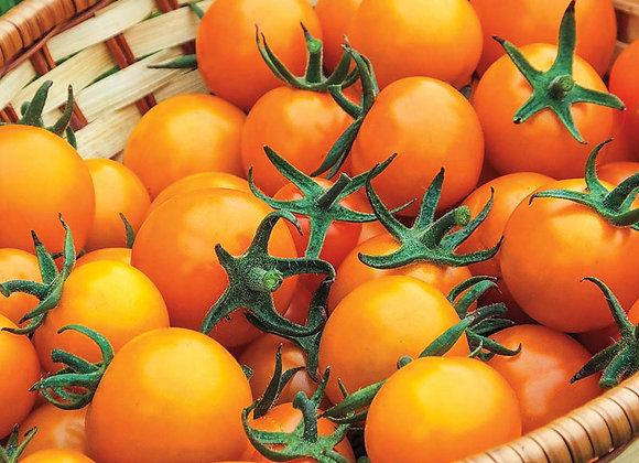 Tomato, Sun Gold