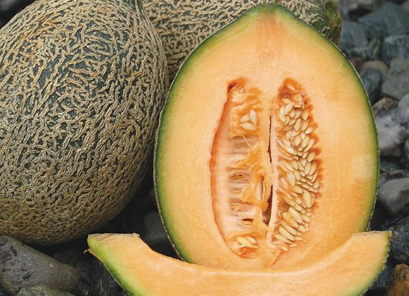 Melon, Hale's Best