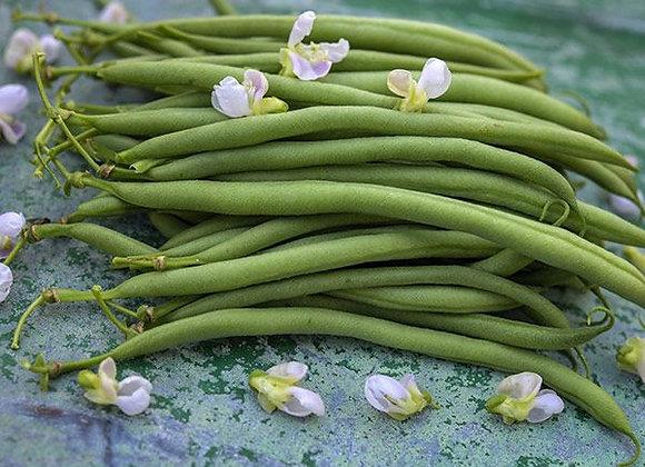 Bean (Bush), Calima