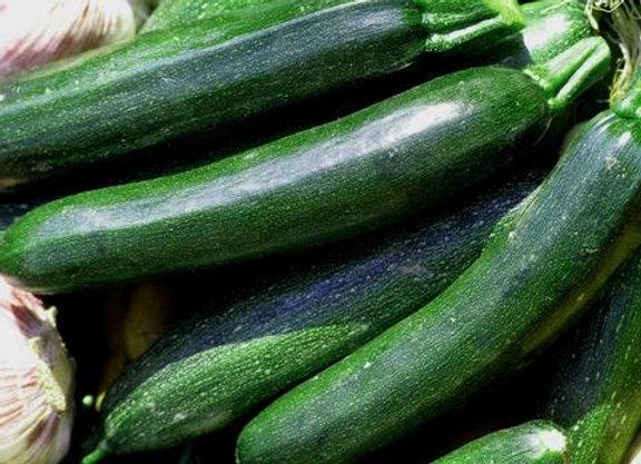 Summer Squash, Black Beauty Zucchini