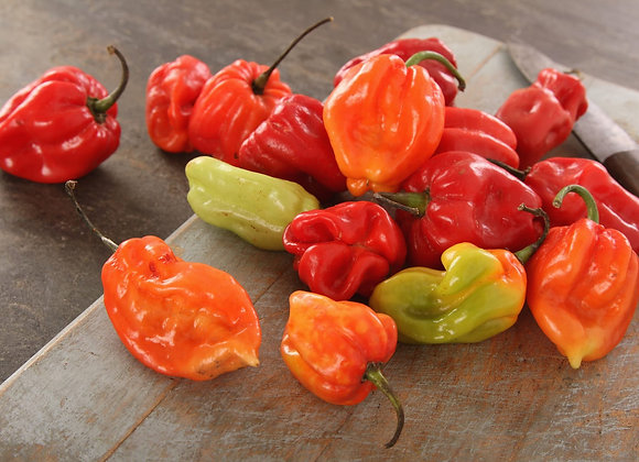 Chile Pepper, Scotch Bonnet