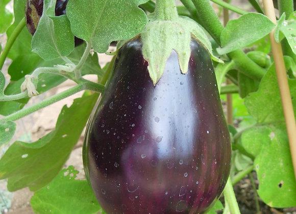 Eggplant, Swapna