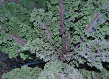 Kale, Purple Moon