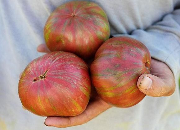 Tomato, Berkeley Tie Dye Pink