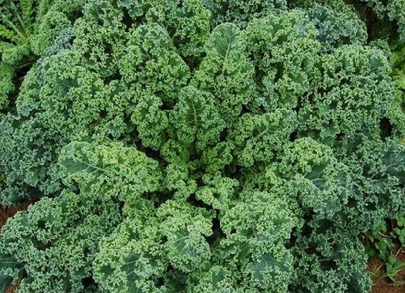 Kale, Vales Blue Scotch Curled