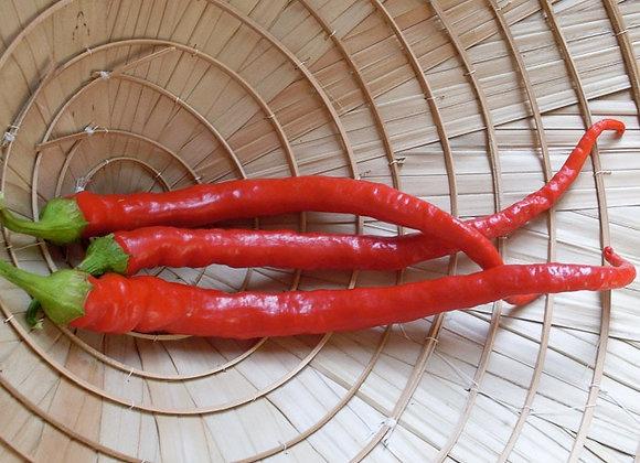 Chile Pepper, Maria Nagy's