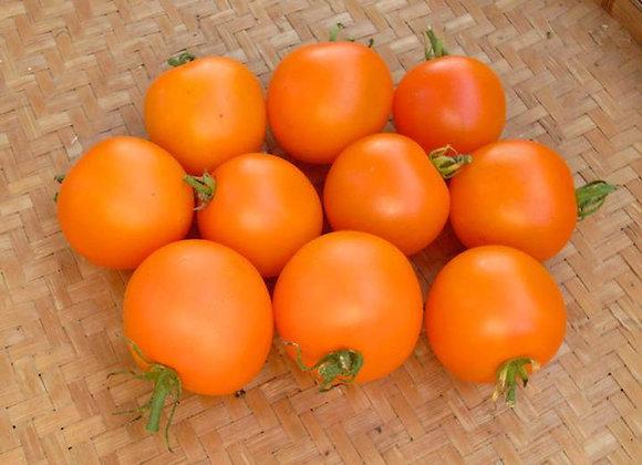 Tomato, Sungella