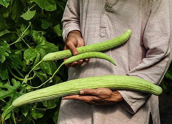 Cucumber, Armenian Yard-Long