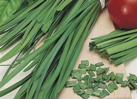 Chives, Garlic