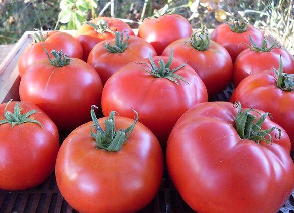 Tomato, Maschenka