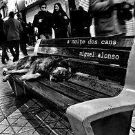 Portada A noite dos cans