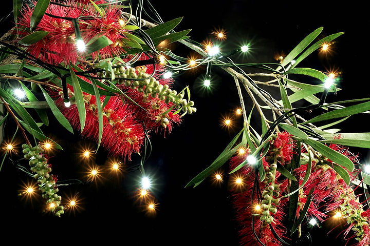 Bottlebrush-Flowers-and-Fairy-Lights-866