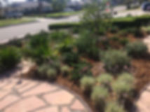 Landscape and irrigation design and installation done on a residence in Glendora California