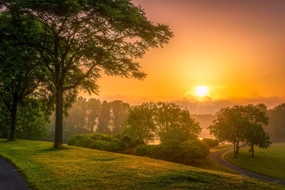 Sonnenaufgang Rheinaue