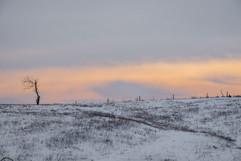 Winter--10895.jpg