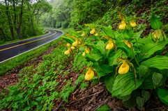 Shenandoah-National-Park-.jpg