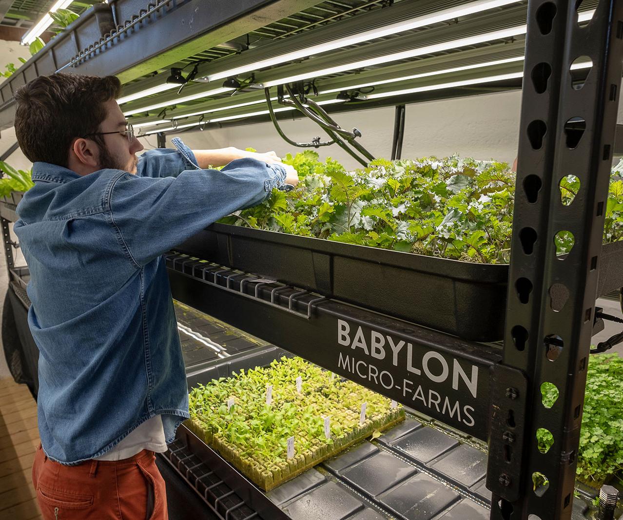 Babylon-Micr-Farms--37