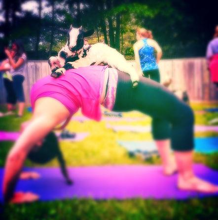 Goat Yoga.JPG
