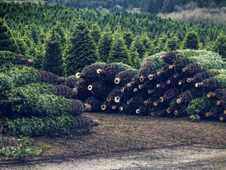 Fire Protection Company's Quick Guide to Christmas Tree Permits, Prescott