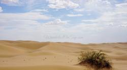 North Algodones Dunes California2016