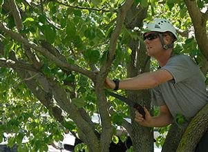tree pruning.jpg