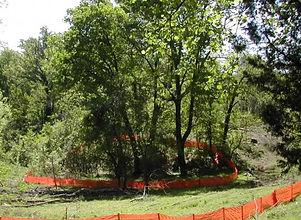 tree preservation.jpg