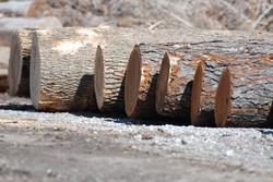 Logs.JPG