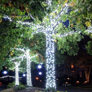 Wellington tree wrap for holiday lightin