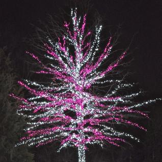 tree wrap.jpg