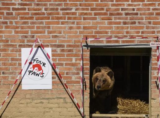 Albanie : Le commerce illégal d'animaux sauvages est « hors de contrôle », déclare Four Paws