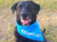 Adopt_Me_Bandana_With_Dog_1_1200x630.jpg
