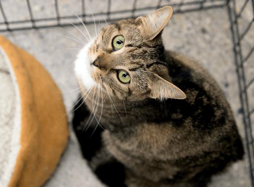 Les bonnes questions à se poser avant l'adoption d'un animal