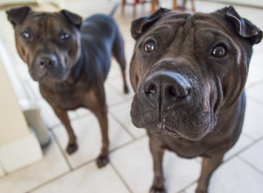 Trouver un logement avec votre animal : Un défi encore difficile en 2020