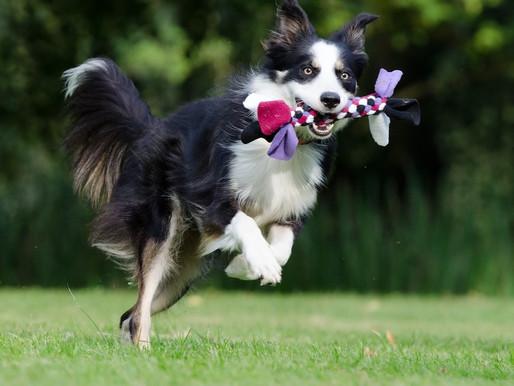 L'inactivité : le pire ennemi de votre chien