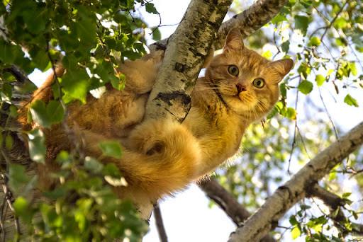 Au secours, mon chat est coincé dans un arbre!