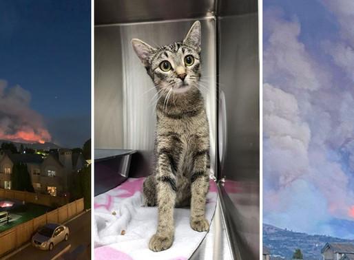 La SPCA de la Colombie-Britannique obligée de déplacer des animaux en raison des incendies de forêt