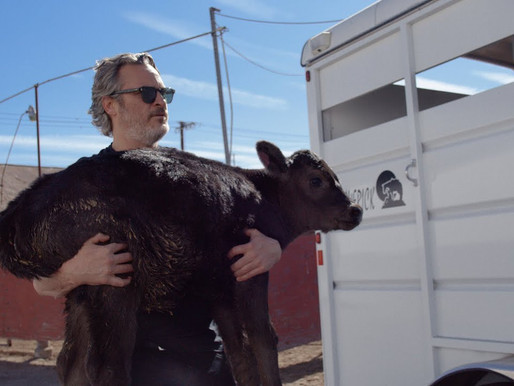 L'acteur Joaquin Phoenix sauve un veau et une vache d'un abattoir