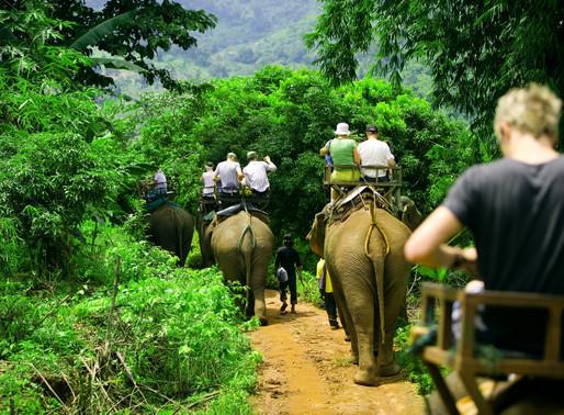 Voyage à dos d'éléphants, une activité touristique bien cruelle