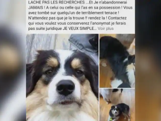 Attention aux vols de chiens