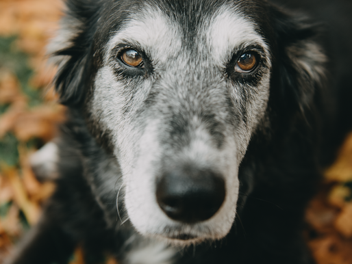 Animaux et spiritualité : Atelier sur la communication animale, une expérience hors du commun