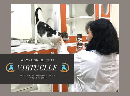 Adoption virtuelle : un vrai succès pour Proanima