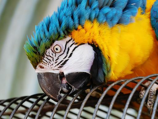Une coopérative d'économie sociale pour le bien-être des perroquets
