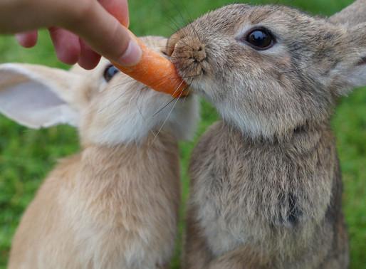 Les 5 mythes les plus courants sur les lapins