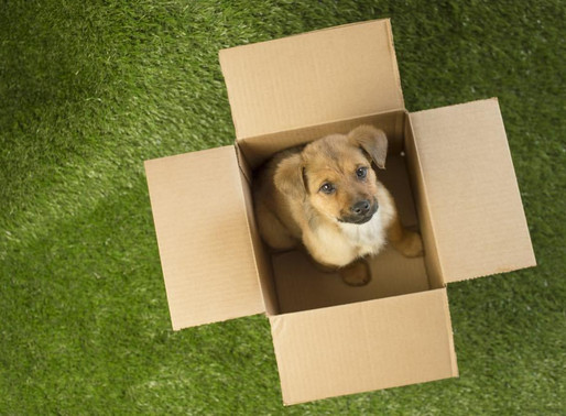 Abandons : Moins d'animaux laissés derrière lors des déménagements