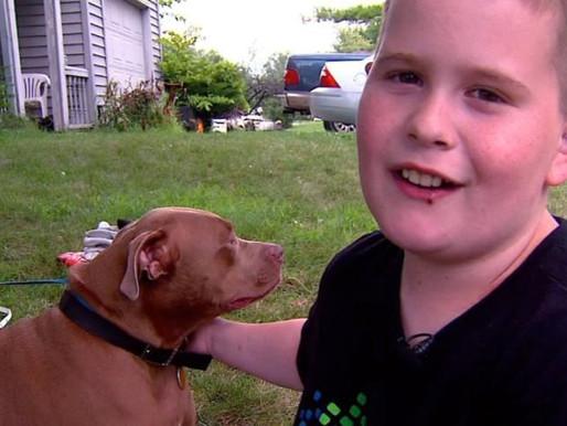 Histoire touchante : Ace, le Pitbull qui a sauvé des flammes un adolescent sourd