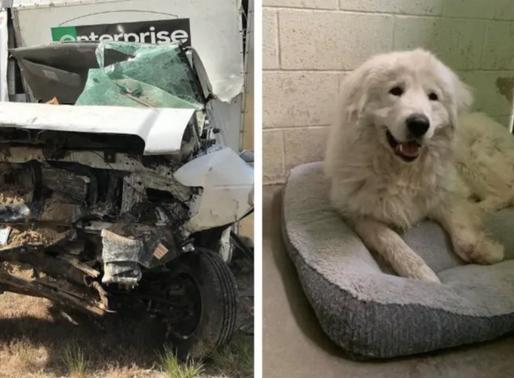 Idaho : Décès de deux personnes et 14 chiens en route vers Calgary
