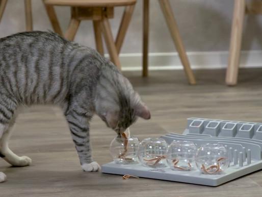 Partie 3 : Cause et solutions des problèmes de comportement chez le chat : Stimulation alimentaire
