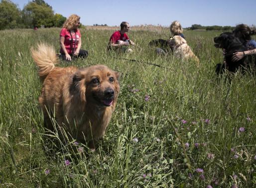 SPCA Montérégie : Protéger les animaux depuis plus de 30 ans